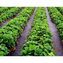 Włóknina czarna na chwasty - do ściółkowania - najlepsza pod płot lub ogrodzenie - 0,80 x 100,00 m