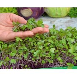 Microgreens - Kalarepa - młode listki o unikalnym smaku - 1040 nasion