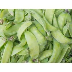 BIO Groch siewny cukrowy Norli - Certyfikowane nasiona ekologiczne