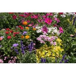 Mieszanka średniowysokich roślin jednorocznych - 50 nasion