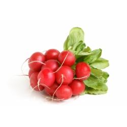 Rzodkiewka Carmesa - czerwona, okrągła - NA TAŚMIE