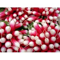 Rzodkiewka Opolanka - półdługa, czerwona z białym końcem - 850 nasion