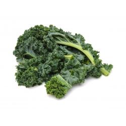Jarmuż Halbhoher grüner krauser - 50 gram - 15000 nasion