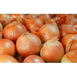 Cebula Ławica - późna, odporna na choroby - 1250 nasion