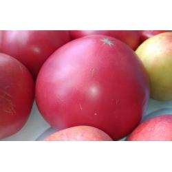 Pomidor Malinowy Retro - gruntowy, malinowy, bez żebrowania