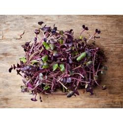 Nasiona na kiełki - Rzodkiewka Red Purple
