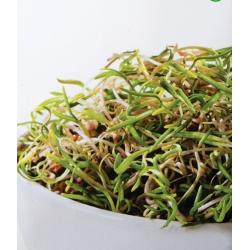 Nasiona na kiełki - Szpinak