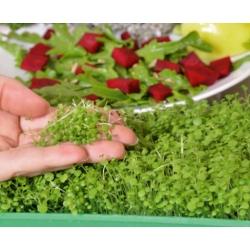 Microgreens – Rukiew wodna - młode listki o unikalnym smaku - 8000 nasion