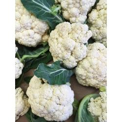 Kalafior Delta - biały do uprawy wiosennej, letniej i jesiennej - 270 nasion