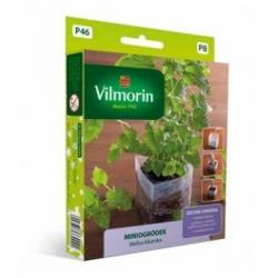 Miniogródek - Melisa lekarska - mini zestaw do uprawy w domu - 600 nasion