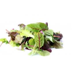 Baby Leaf - Mieszanka fantazyjna
