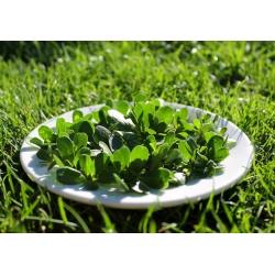 Baby Leaf - Portulaka warzywna