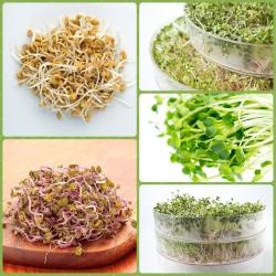 Nasiona na kiełki - Pikantny MIX - Zestaw 3 szt. + kiełkownica z 1 szalką