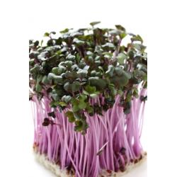 Nasiona na kiełki - Łagodny MIX - Zestaw 5 szt. + kiełkownica z 3 szalkami