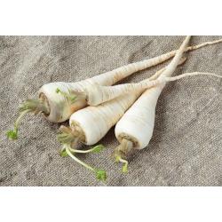 Nasiona na taśmie - Pietruszka korzeniowa Halblange (Berlińska) - późna