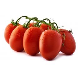 Pomidor Cencara F1 - szklarniowy, wysoki