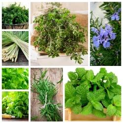 Herb Garden - zestaw 8 rodzajów ziół, sekret smaku i aromatu
