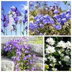 Nasiona dzwonków - zestaw 4 odmian