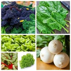 Warzywna Wyspa 2 - zestaw 6 rodzajów warzyw odpowiedzialnych za wzmocnienie organizmu