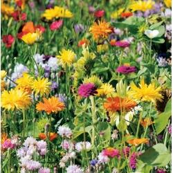 Mieszanka kwiatów - Wabiąca Ptaki