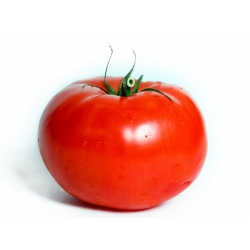 Pomidor Gigant