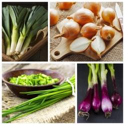 Warzywa cebulowe - zestaw 1 - 4 gatunki nasion
