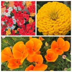 Mieszanka kwiatów - Flamenco - NA TAŚMIE