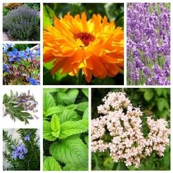 Zestaw roślin leczniczych - 8 gatunków nasion