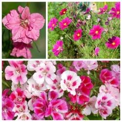 Mieszanka kwiatów - Swing - NA TAŚMIE