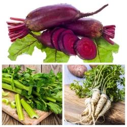 Warzywa do uprawy współrzędnej - Zestaw 1 - 3 gatunki nasion