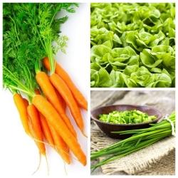 Warzywa do uprawy współrzędnej - Zestaw 6 - 3 gatunki nasion