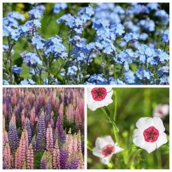 Mieszanka kwiatów - Walc - NA TAŚMIE