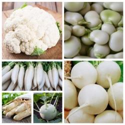 Warzywa białe - zestaw powiększony - 10 gatunków nasion