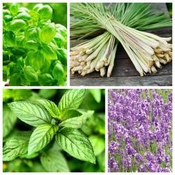 Zestaw roślin odstraszających muchy - 4 gatunki nasion
