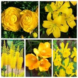 Kompozycja roślin w kolorze żółtym - zestaw 5 gatunków roślin - 80 szt.
