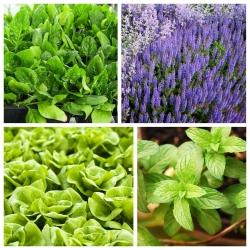 Zestaw roślin odstraszających szkodniki - pchełki ziemne - 4 gatunki nasion
