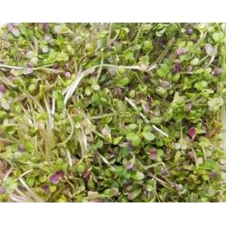 BIO Nasiona na kiełki - Gorczyca - Certyfikowane nasiona ekologiczne