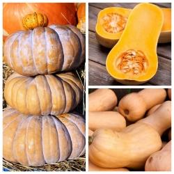 Dynia piżmowa - zestaw 3 odmian nasion warzyw