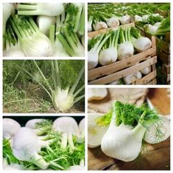 Fenkuł, Koper włoski - zestaw 3 odmian nasion warzyw