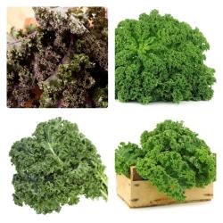 Jarmuż - zestaw 4 odmian nasion warzyw