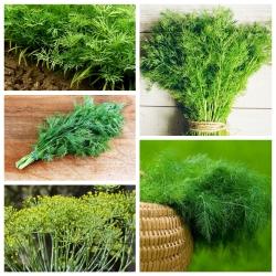 Koper - zestaw 5 odmian nasion warzyw