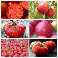Pomidor malinowy - zestaw 1 - 6 odmian nasion warzyw