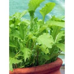 Mini ogród - Pikantne cięte listki - do uprawy na balkonach i tarasach