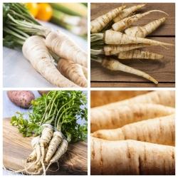 Pietruszka - zestaw 4 odmian nasion warzyw
