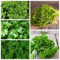 Pietruszka naciowa - zestaw 1 - zestaw 5 odmian nasion warzyw