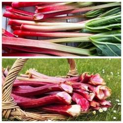 Rabarbar - zestaw 2 odmian nasion warzyw