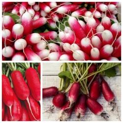 Rzodkiewka półdługa - zestaw 3 odmian nasion warzyw