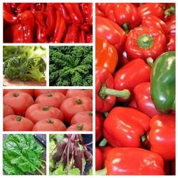 Warzywa wspomagające zdrową dietę - zestaw 7 odmian nasion