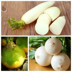 Rzepa, rzodkiew, brukiew - zestaw 3 odmian nasion warzyw
