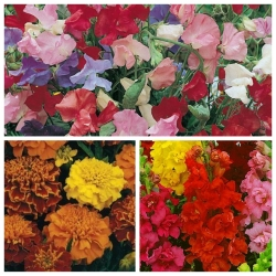 Mieszanka kwiatów - Fokstrot - NA TAŚMIE